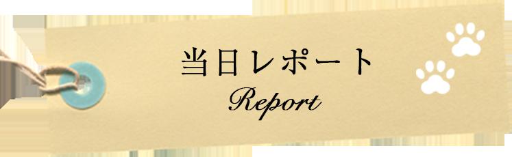 当日レポート